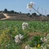 GALERÍA FOTOGRÁFICA: El Picazo en Primavera