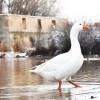 GALERÍA FOTOGRÁFICA: El Picazo en Invierno